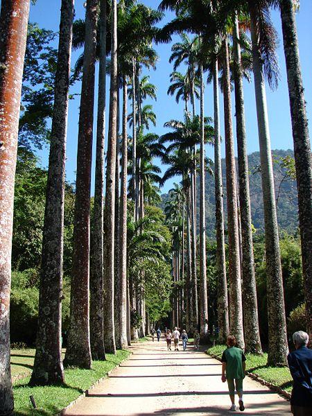 jardim vertical rio de janeiro:Rio De Janeiro Botanical Gardens Palm Trees