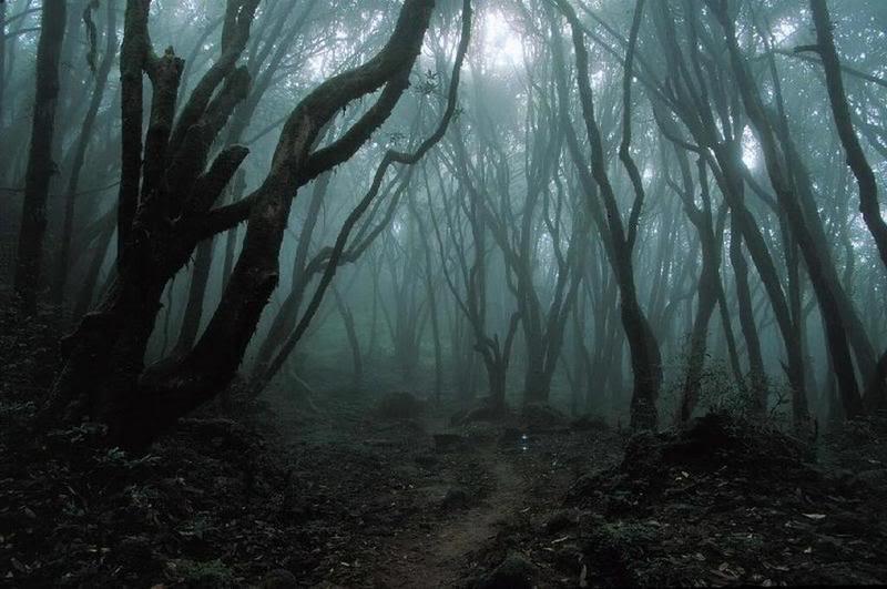 Henry e Dylan // O conde sangrento. Dark_forest